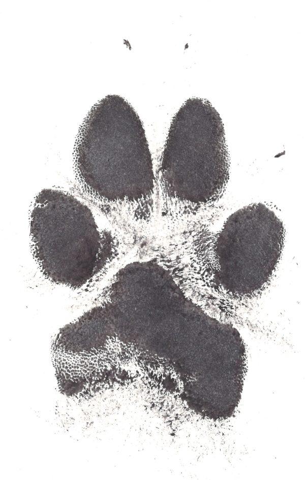 Ink Paw Print